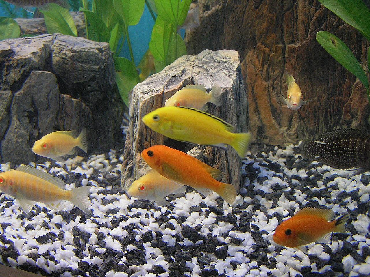 Akvarijní ryby prodej